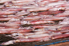 Dried squid with sun Stock Photos