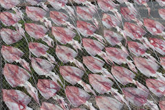 Dried squid in Thailand Royalty Free Stock Image