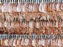 Dried squid, traditional squids drying in Grilled squid in Thailand market. Royalty Free Stock Photography