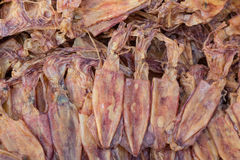 Dried Squid, traditional squids drying in the sun Stock Photography