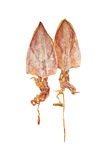 Dried squid on white isolted background with clipping path. Royalty Free Stock Photography