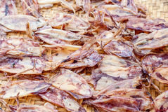 Dried squids in seafood Stock Image