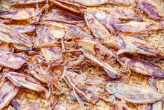 Dried squids in seafood market Stock Images