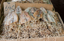 Dried squids in Thailand Stock Photos