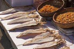 Dried squids in Vietnam royalty free stock photos