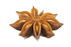 Dried star anise flower Stock Photography