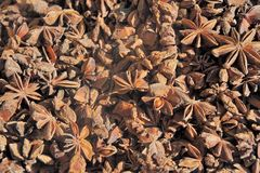 Dried star anise seed Royalty Free Stock Photos