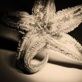 Dried Starfish stock images