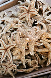 Dried starfish in a chinatown medicine shop Stock Images