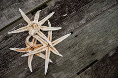 Dried Starfish Stock Photos