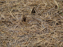 Dried Steams on Field Stock Photography