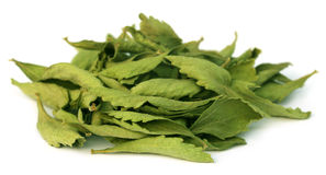 Dried Stevia leaves Royalty Free Stock Image