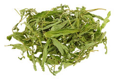 Dried Stevia leaves (sweet leaf, Sugar leaf) a sweetener and sug Stock Images