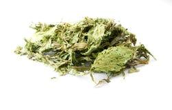 Dried Stevia Stock Photography