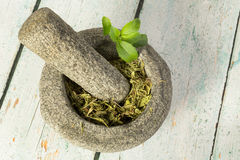Dried stevia sugar substitute Stock Photography