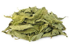 Dried stevia Royalty Free Stock Photography