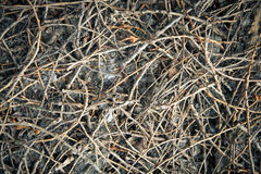 Dried sticks pattern texture. Stock Images