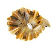 Dried Stingray fish Stock Photos
