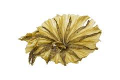 Dried Stingray fish. royalty free stock photos