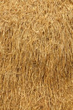 Dried straw Royalty Free Stock Photo