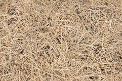 Dried straw over soil Stock Image