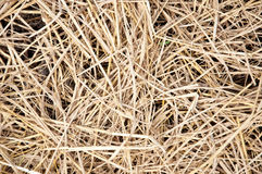 Dried straw over soil Royalty Free Stock Photography