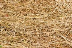 Dried straw Stock Photos