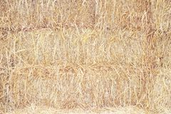Dried straw texture for background ,natural rural patterns royalty free stock photography