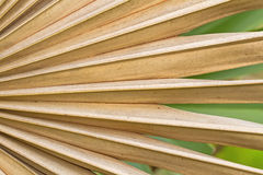 Dried sugar palm leaf background Stock Images