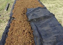 Dried Sultanas On A Groundsheet. Royalty Free Stock Images