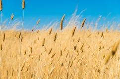 Dried summer grass stock photos