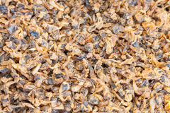Dried Surf clam  Paphia undulata  for sale in market Stock Photo