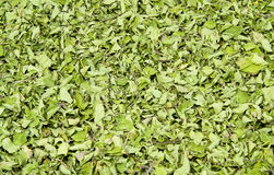Dried sweet basil. Green herb stock photos