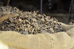 Dried tabacco leaves Royalty Free Stock Images