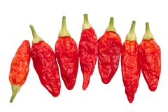 Dried Tabasco chiles C. frutescens, top, path. Dried Tabasco chile peppers Capsicum frutescens pods. Top view, clipping paths Royalty Free Stock Photography