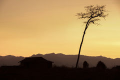 Dried and tall silhouette tree Stock Photo