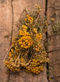 Dried tansy branches Royalty Free Stock Photography