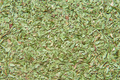 Dried tarragon leaves Royalty Free Stock Image