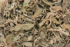 Dried tea green leaves for drink Stock Images