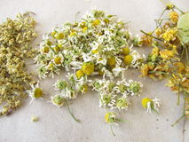 Dried tea herbs Stock Images
