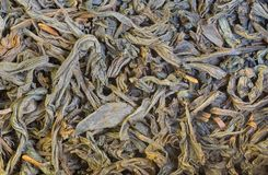 Dried tea leaves close-up Royalty Free Stock Photography