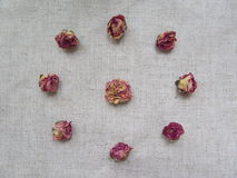Dried tearoses buds on linen background Royalty Free Stock Image