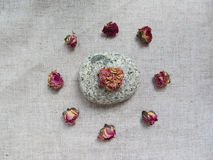 Dried tearoses buds  and stone on linen background Royalty Free Stock Photography