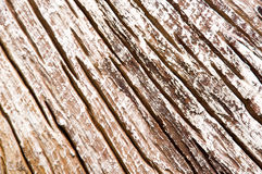 Dried tee wood Royalty Free Stock Photography