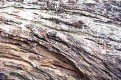 Dried tee wood Stock Photos