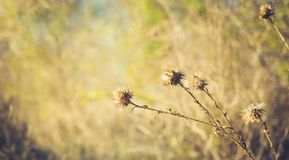 Dried thorn on natural background. stock photos