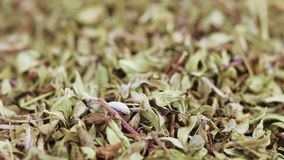 Dried thyme in bulk. Medicinal herbs thyme in bulk stock video