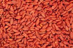 Dried Tibetan goji berries Royalty Free Stock Images