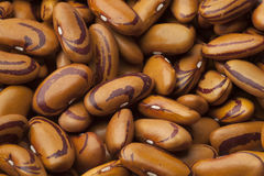 Dried Tigers eye beans Royalty Free Stock Images