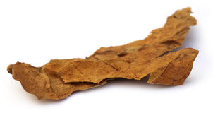 Dried tobacco leaf Stock Images